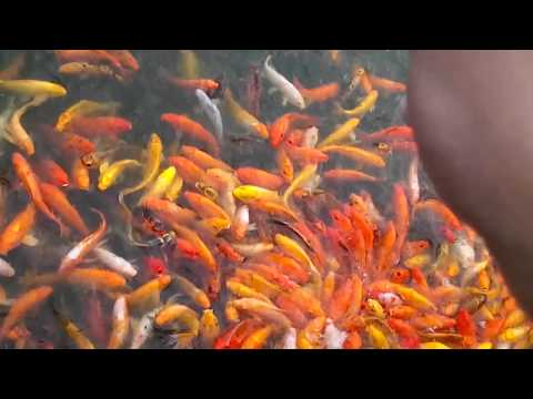 Fish bonding @[NUvaLI PaRK] Sta. Rosa laguna