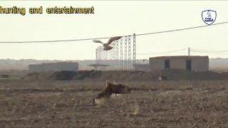 Eagle vs Falcon/A confrontation between the falcon and the eagle