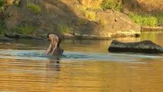 TERRITORY OF THE HIPPO (sunset at the Kruger National Park, South Africa)