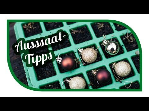 aussaat tipps f r dezember microgreens with timelapse. Black Bedroom Furniture Sets. Home Design Ideas