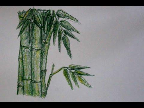 Cara Menggambar Pohon Bambu Dengan Pensil Warna Yang Mudah Youtube