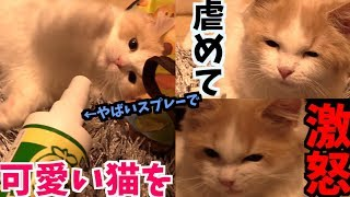 最強スプレーで子猫を虐めてみた結果・・・めちゃめちゃうちの子が可愛かったw【ビターアップル 最強しつけ猫グッズ】 thumbnail