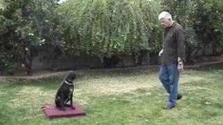 Dog Squad - Boundary Training @ Home