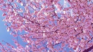 Обзор детских книг и пособий о весне. Часть 1.