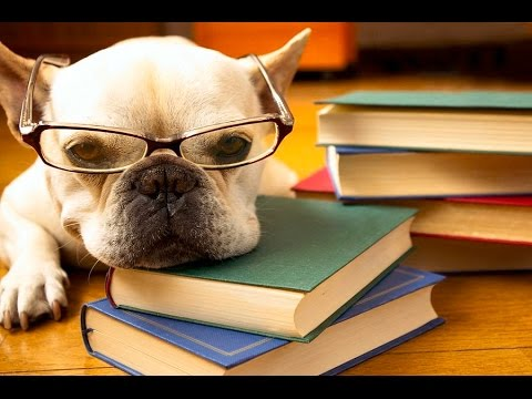 TO STUDY OR NOT TO STUDY - Funny dog video