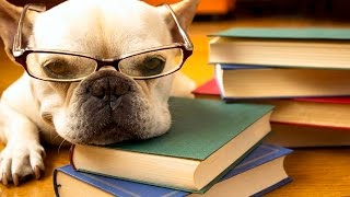 TO STUDY OR NOT TO STUDY - Funny dog video thumbnail