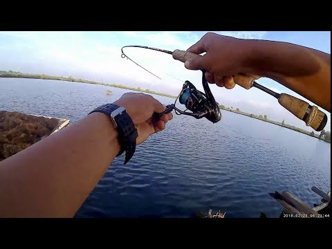 Mancing ikan cukil/pelak/barramundi tlocor, lure DUO Spearhead Ryuki 45s l Ultralight fishing