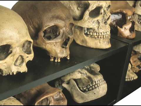 "Evolution researchers discuss ""On the Origin of Species"""
