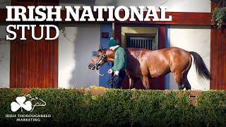 ITM Irish Stallion Showcase 2021 - Irish National Stud