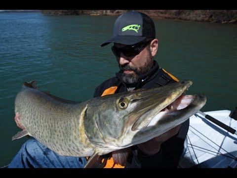 Fishing Lake Ontario, Lake Erie, Niagara River And The Tributaries   The Fisherman Magazine
