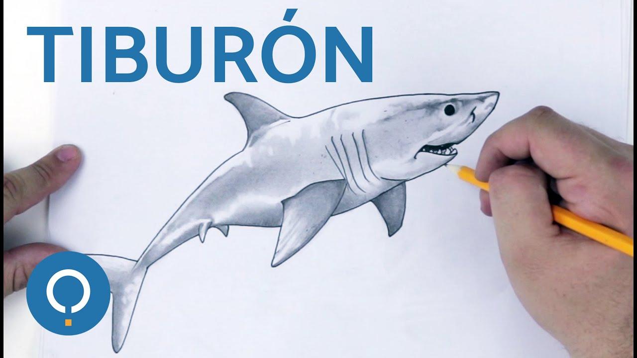 Cómo Dibujar Un Tiburón Speed Drawing