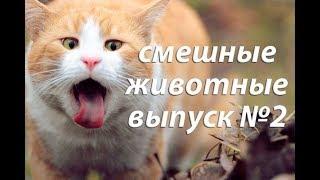 Смешные гифки. Смешные животные. Смешные видео. Выпуск №2