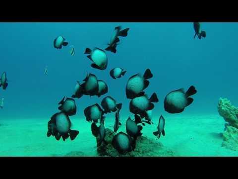 Damsel Fish 1