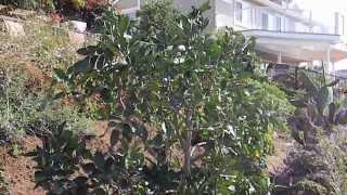 Citrus Salad Tree Trimming & Care