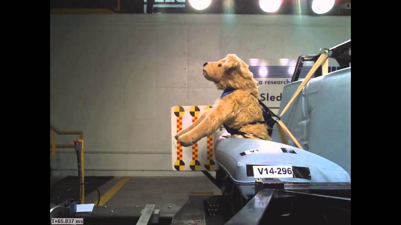 Solvit dog harness crash test