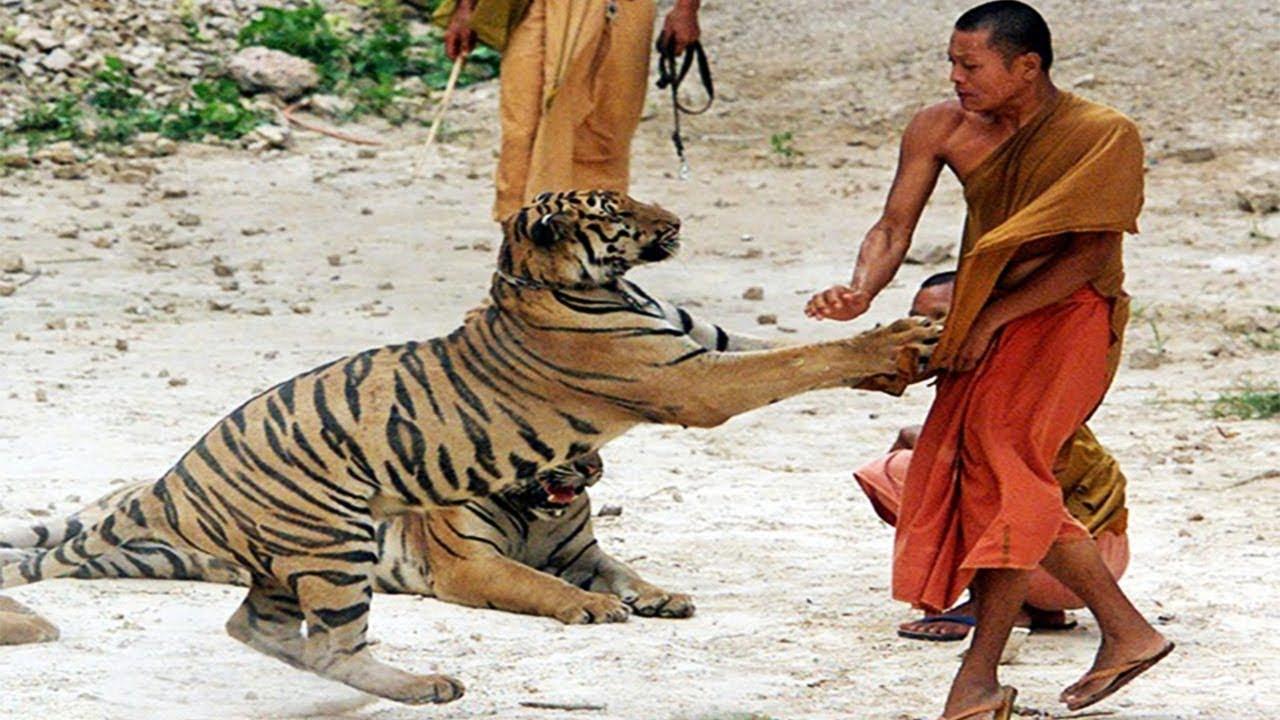 7 حيوانات مفترسة تعد الأخطر على البشر فى العالم عالم الحيوانات المفترسة Youtube