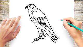 How to Draw a Falcon Step by Step for Toddler