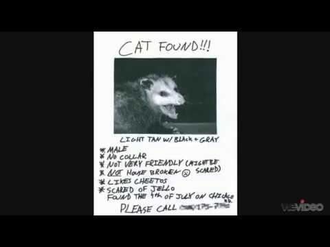 Cat Found\