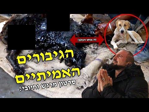 הם הצילו את הכלב הזה ממוות נוראי!