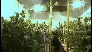 cultivo indoor: Cap IV  Sistemas Hidropónicos y Aeropónicos audio español