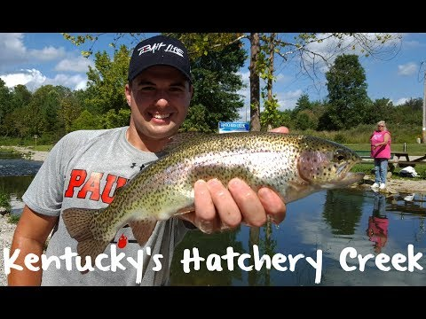 Trout Fishing Kentucky's Hatchery Creek