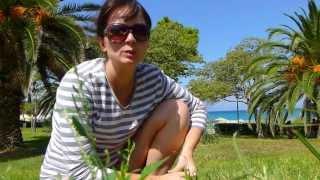 халкидики ханиоти видео