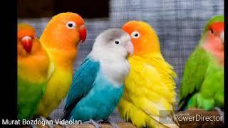 Dünyanın En Güzel Ve Sevimli Hayvanları-most beautiful Animals