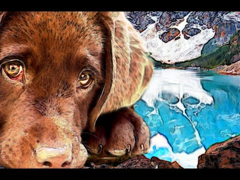 LABRADOR RETRIEVERS brief history of DoG BReeD art artwork origin St. John's Dog background facts