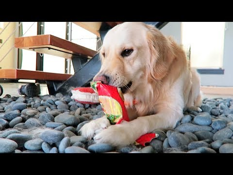 PUPPY OPENING CHRISTMAS PRESENTS (Super Cooper Sunday #125)