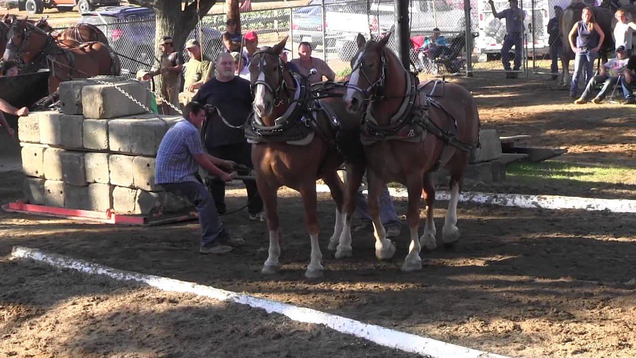 Download Draft Horse Pull 2013 Deerfield Fair NH Pulling Video 7