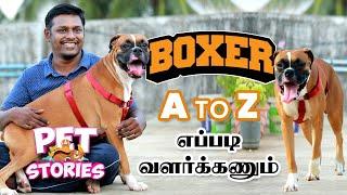 பார்க்கத்தான் TERROR, உண்மையில் ஒரு குழந்தை  | Boxer Dogs Breed Details in Tam | Pet Stories