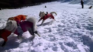 2011/1/22 富士見パノラマで初の雪遊び.