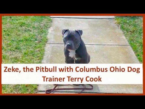Dog Training in Columbus Ohio with Zeke, the Pitbull & Columbus Ohio Dog Trainer Terry Cook