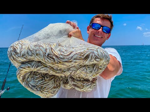 Netting & Eating THOUSANDS Of Bait Fish- Catch Clean Cook (Florida Bay Anchovy)