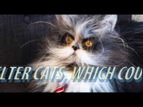 Werewolf Cats Drawing Crowds at London Cat Show