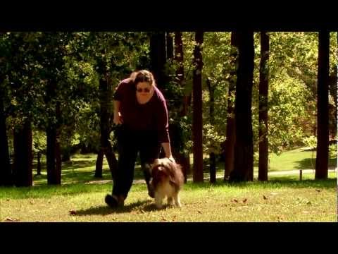 FDA and Pet Food