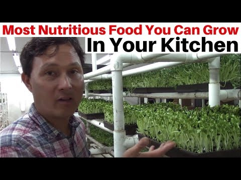 Most Nutritious Food You Can Grow in Your Kitchen