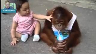 СМЕШНЫЕ ДЕТИ ВИДЕО ЮТУБ - Приколы дети и Разные животные(Дети играют с собаками, танцуют и дерутся с кошками, едят в кампании с обезьяной и другие веселые моменты,..., 2015-10-13T11:30:36.000Z)