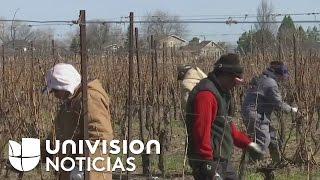 Así viven los trabajadores agrícolas hispanos que cuidan las cosechas de los campos canadienses