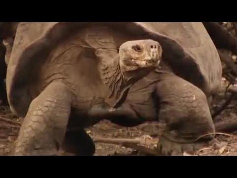 Alien invasion on the islands - BBC Environment
