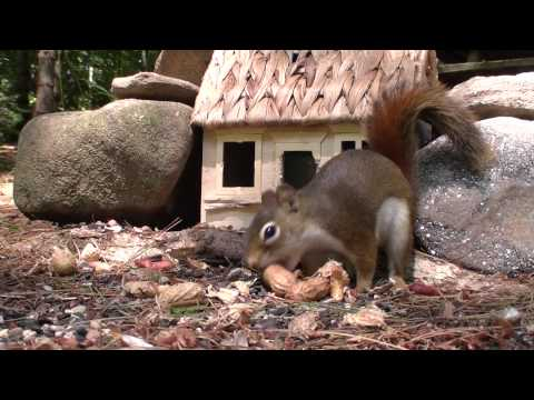 Red Squirrel & Chipmunk