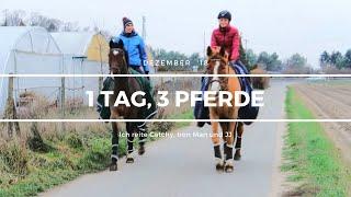 1 Tag, 3 Pferde - Ich reite Catchy, Iron Man und JJ | Dezember '18