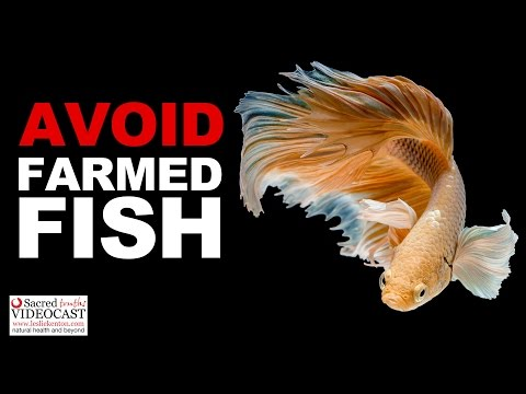 Sacred Truth Ep. 57: Avoid Buying Farmed Fish