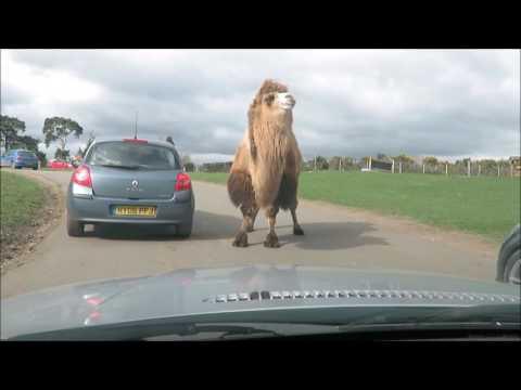 West Midlands Safari Park Vlog March 2017