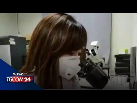 Coronavirus dai pipistrelli, una Tv coreana: 'Non stanno dicendo la verità'