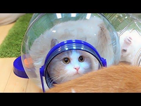 고양이를 단체로 납치하는 방법