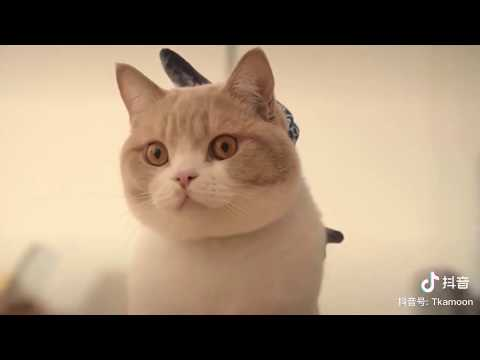 vận chuyển thú cưng chó mèo đi quốc tế : Mỹ Canada - Helen express