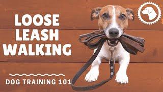 Tips to Teach Your Dog Loose Leash Walking | DOG TRAINING 🐶 Brooklyn's Corner