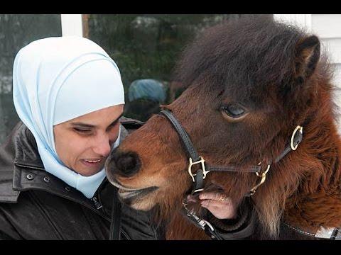 Guide Horse For Blind