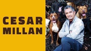 A minha opinião sobre CESAR MILLAN (o encantador de cães)